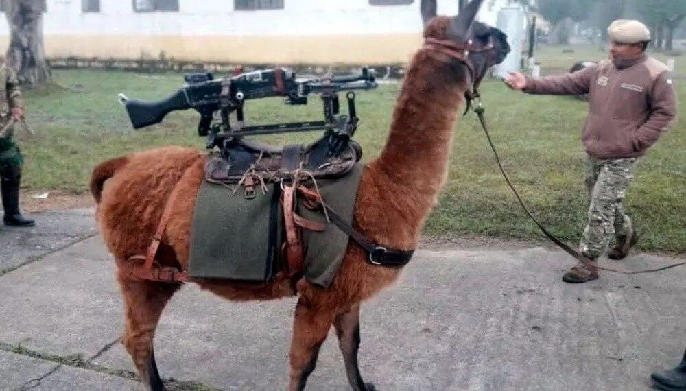 Llama_Ejército.jpg