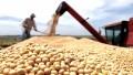 Baja la confianza de los productores, según encuesta académica