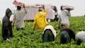 Los peones rurales y las cámaras agropecuarias acordaron un aumento salarial del 48%