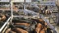 Por el cepo, bajaron las exportaciones de carne bovina en agosto
