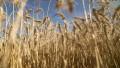 El Estado se queda con el 57% de las divisas generadas por la siembra de soja