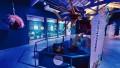 Estación Oceánica: el nuevo espacio educativo del Ecoparque porteño