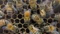 Colombia atribuye mortandad de abejas al cuestionado fipronil